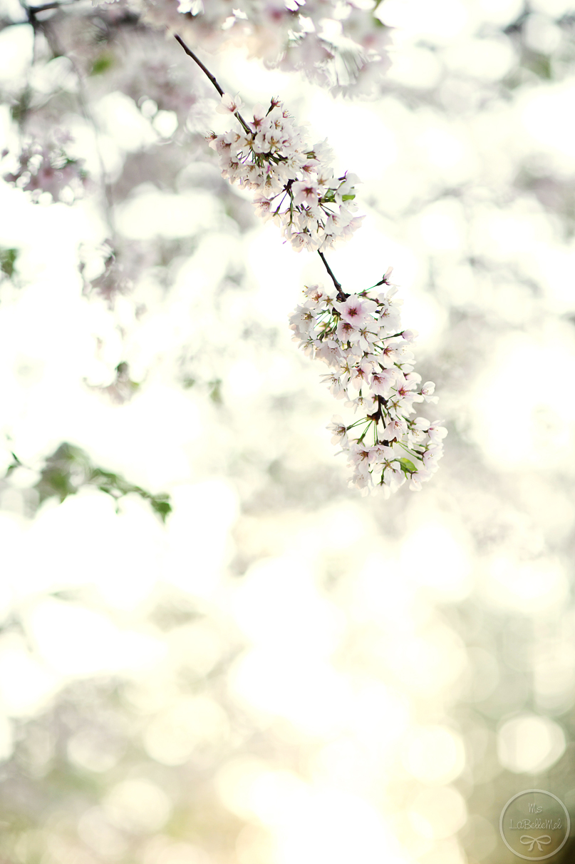 868A9157_cherry_blossom