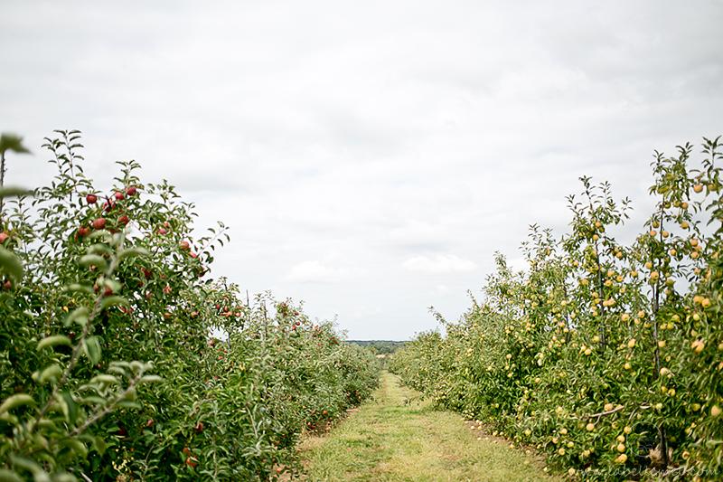 LaBelleMel-Apple-Pickings-0-1