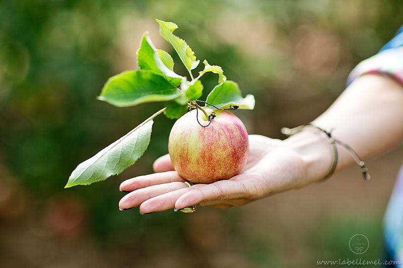 LaBelleMel-Apple-Pickings-2-2