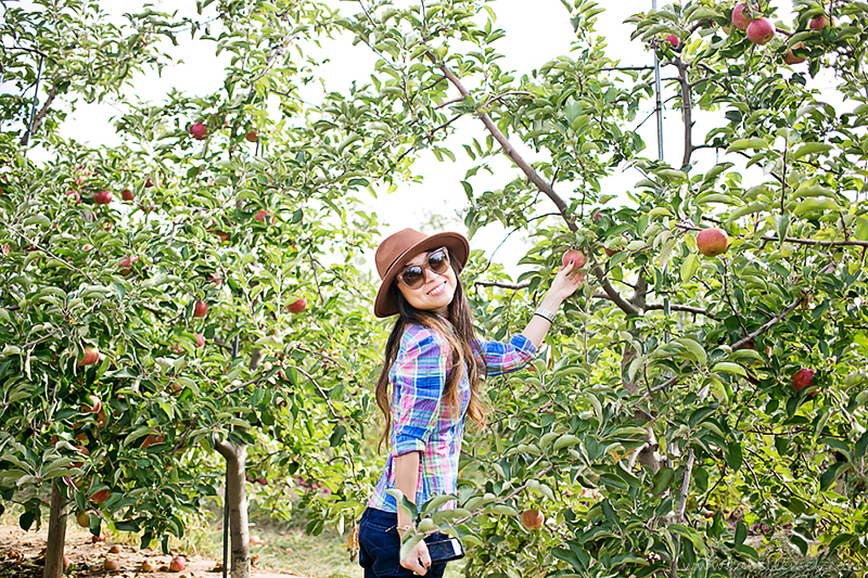 LaBelleMel-Apple-Pickings-3