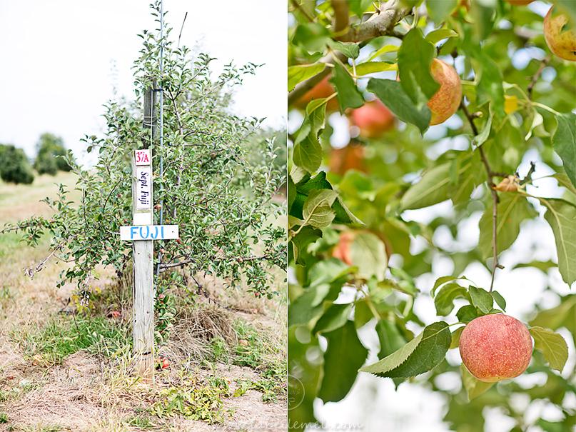 LaBelleMel-Apple-Pickings-4_0