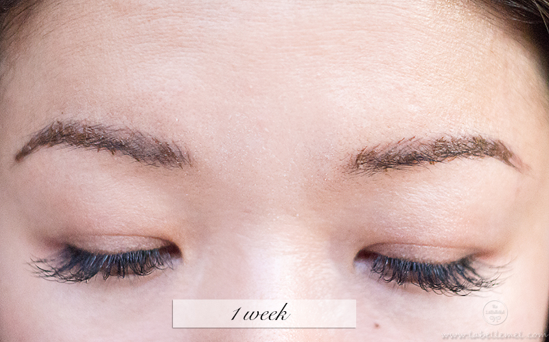 LaBelleMel_Permanent_Brow_Makeup_4_1weekbrows
