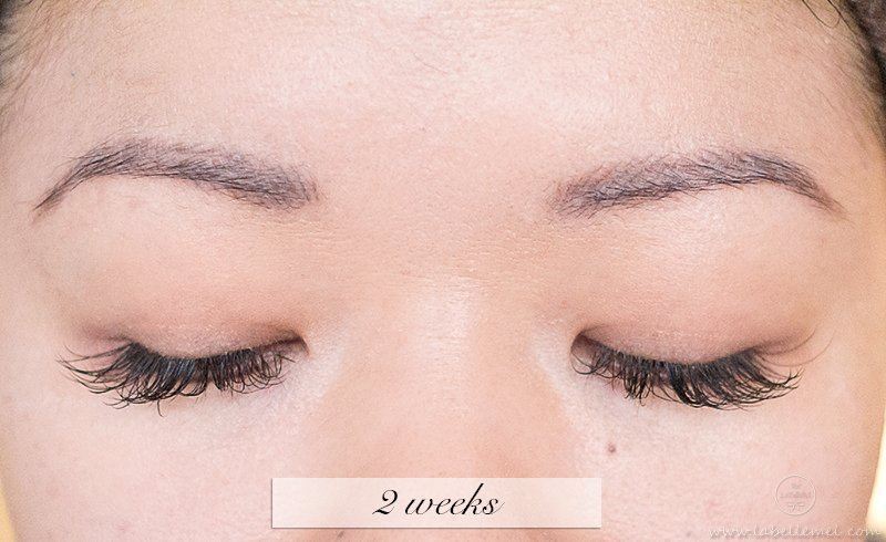 LaBelleMel_Permanent_Brow_Makeup_5_2weekbrows